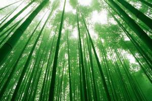 3D Wandpaneele - Bambus - Naturprodukt - Deckenpaneele - 3D Tapeten