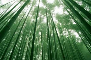 3D Wandpaneele - Naturprodukt - Bambus - Deckenpaneele - 3D Tapeten