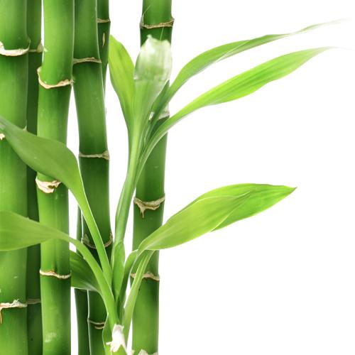3D Wandpaneele - Bambus - Naturprodukt