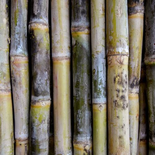3D Wandpaneele - Bambus - Naturprodukt - Zuckerrohr